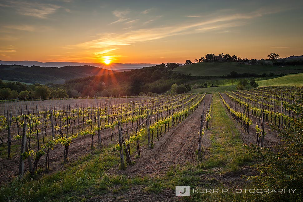 Tuscan Vineyard at Sunrise